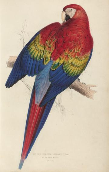 colourful parrot illustration