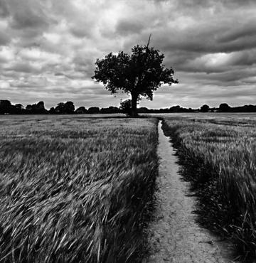 a lone tree in black and white